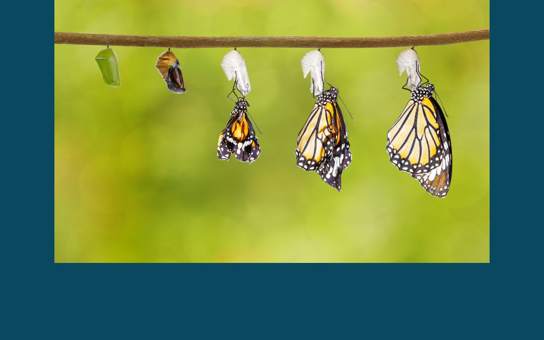 Get What You Want… Caterpillars and Butterflies